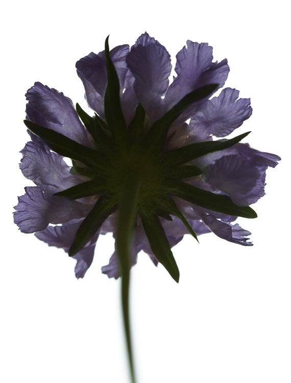 061511_flowers_190.jpg