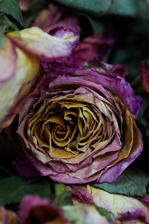 062311_al_flower_test_256.jpg