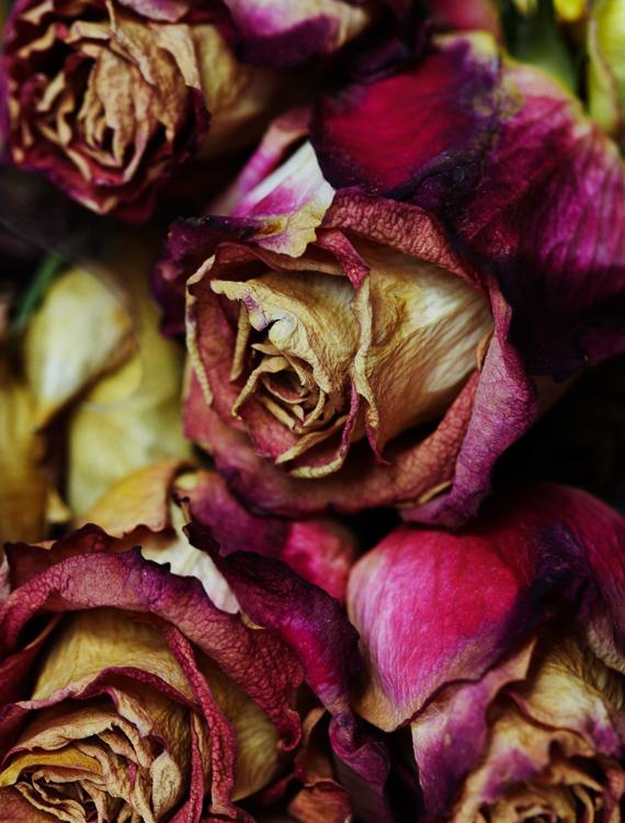 062311_al_flower_test_254.jpg