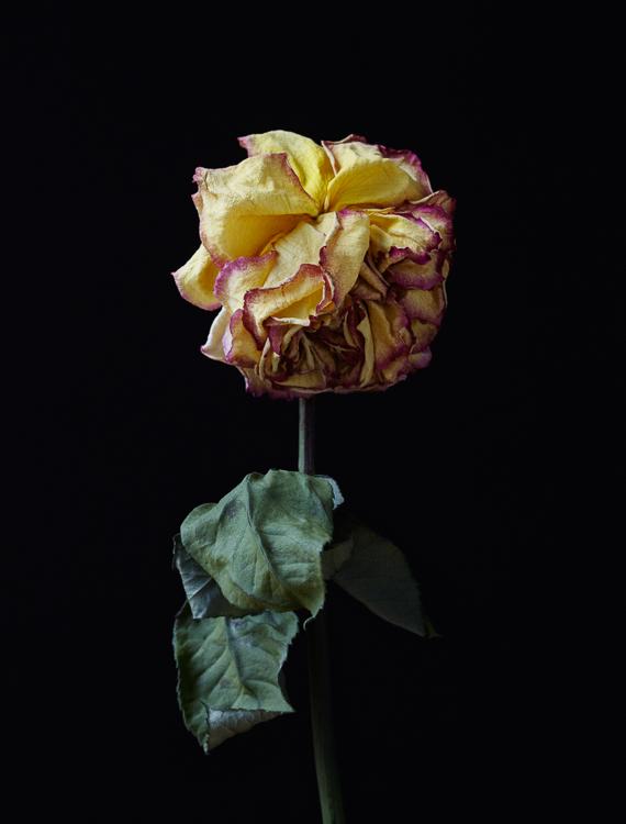 062311_al_flower_test_304.jpg