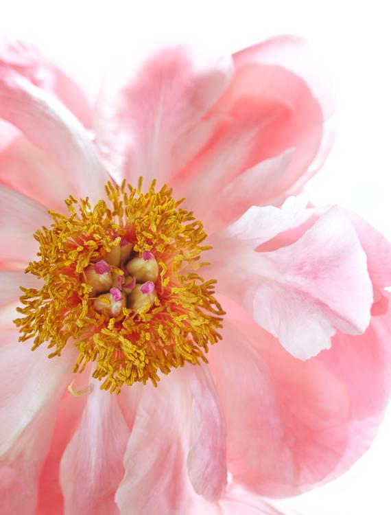 061511_flowers_092.jpg