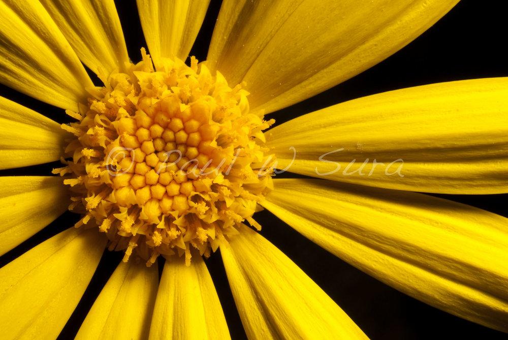 veg·e·ta·ble organisms that produce their own food via photosynthesis.