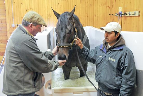 Fair Hill Equine