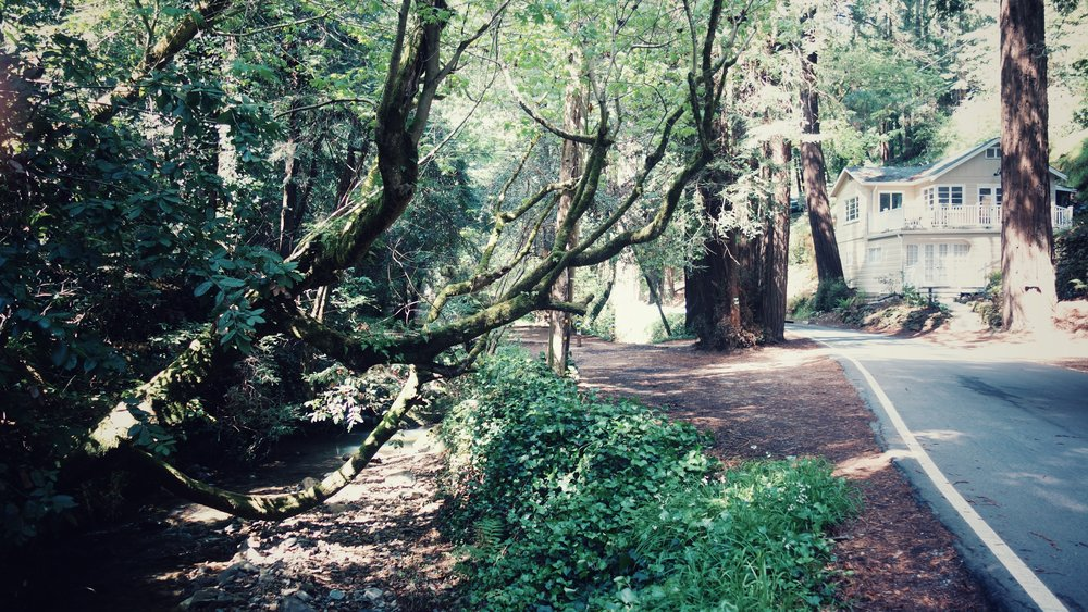 One of the houses embedded within the Redwoods.