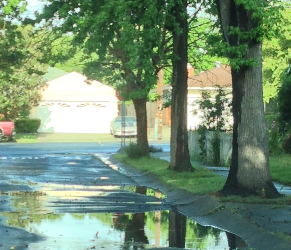 Puddle Reflections square.jpg