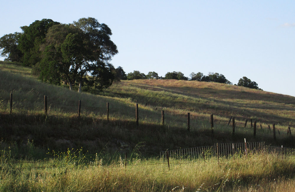 Grassy slope horizontal.jpg