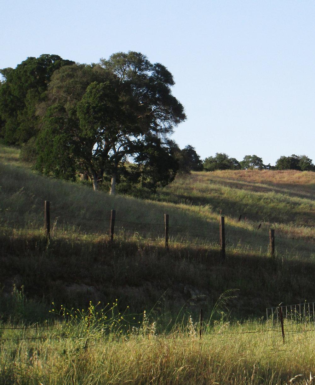 Grassy slope vertical.jpg