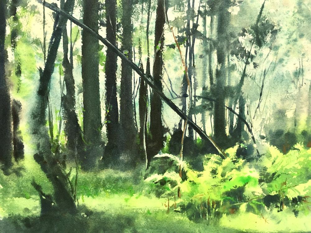 Ferny grove.jpg