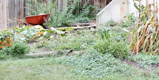 messy-garden1.jpg