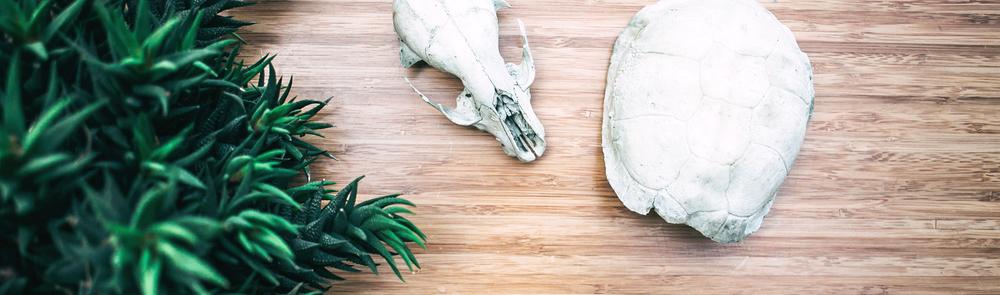 Banner_hollow_skulls.jpg