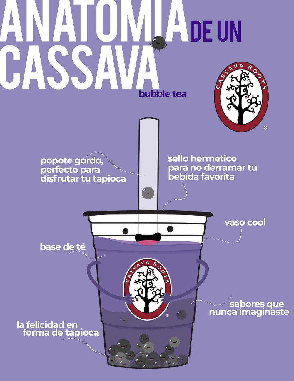 Anatomía Cassava Roots
