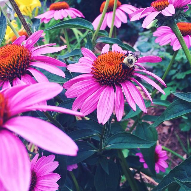 flower.jpeg