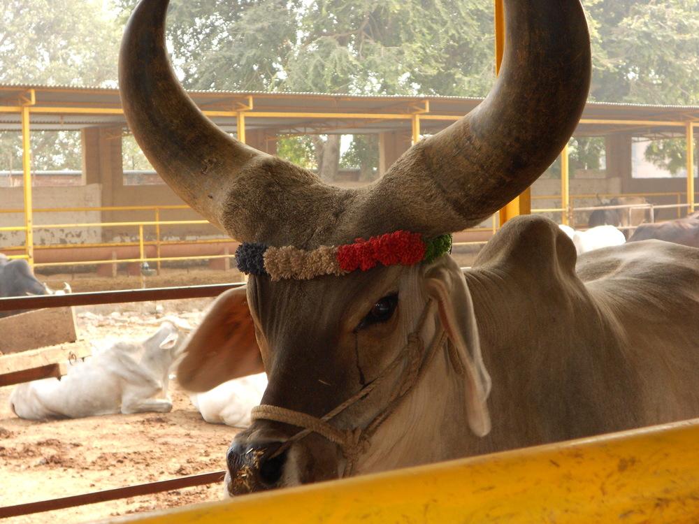 india 2011 016.JPG