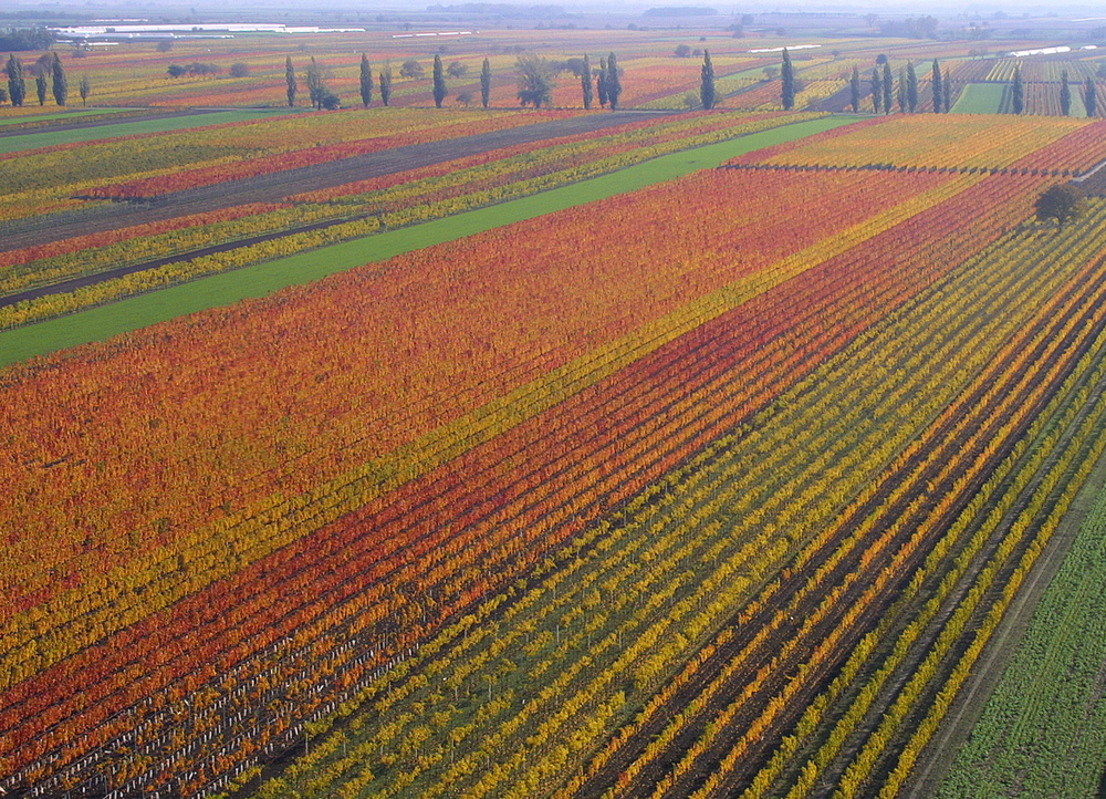 Vineyards in the Fall © Burgenland Tourismus, Christian Teske