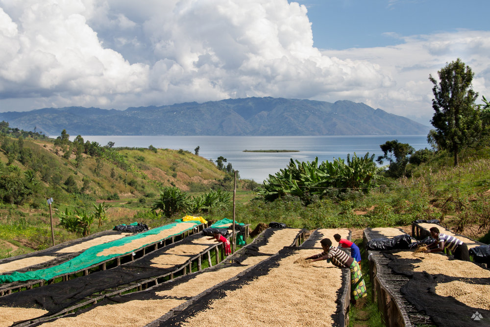 Views from the top of the drying beds at Gisheke, overlooking Lake Kivu.