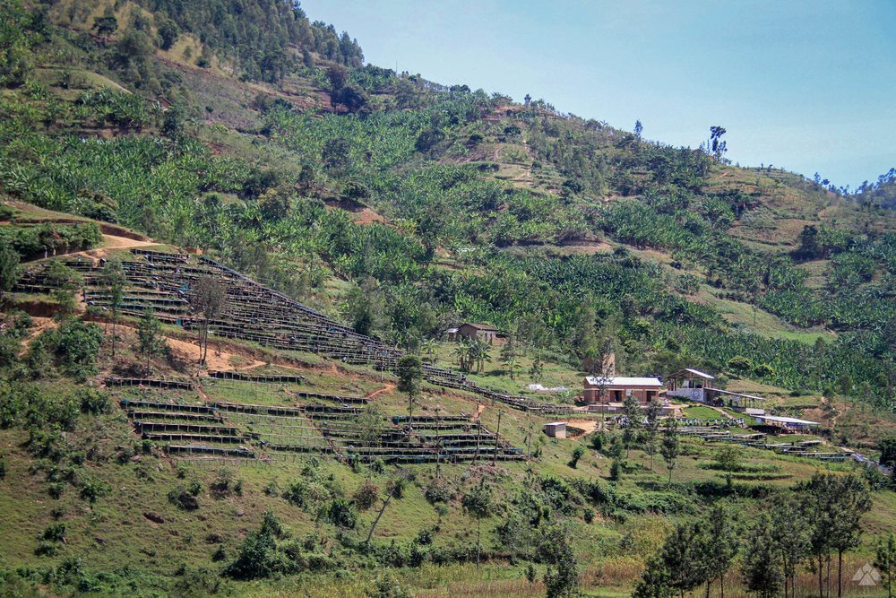 Kilimbi washing station and the surrounding hills