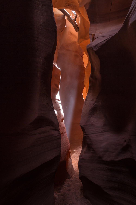 Desert driftwood