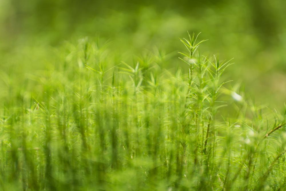 Moss Entropy