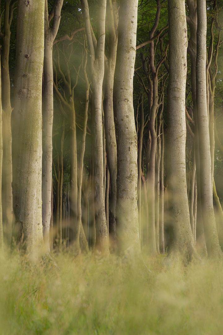 Spirit forest.jpg