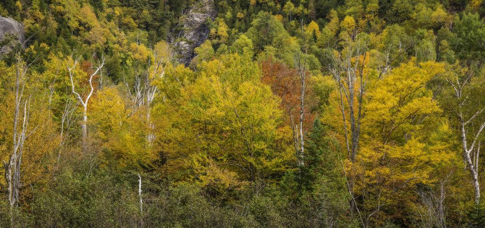 Adirondack autumn.jpg