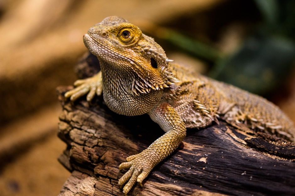 Research shows that your customer's decision-making power might be similar to a lizard's.