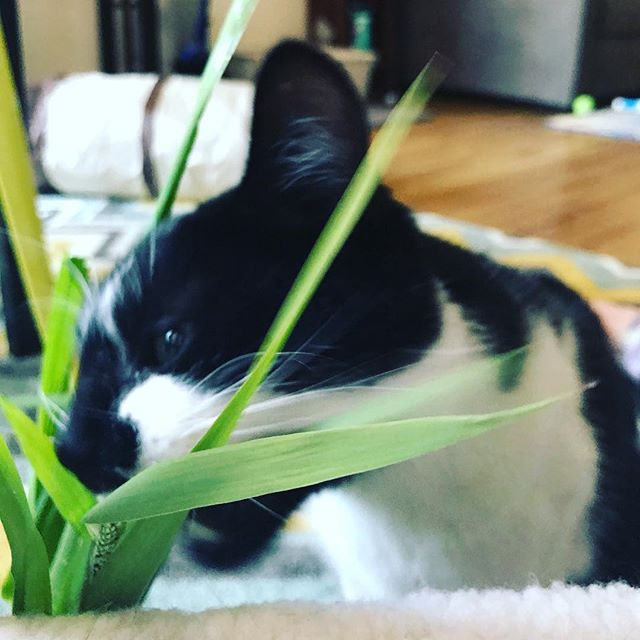 The finest bouquet of grass for the flower-destroying kitter. The flower lady definitely laughed when I asked if I could buy $2 of the grass for my cat.
