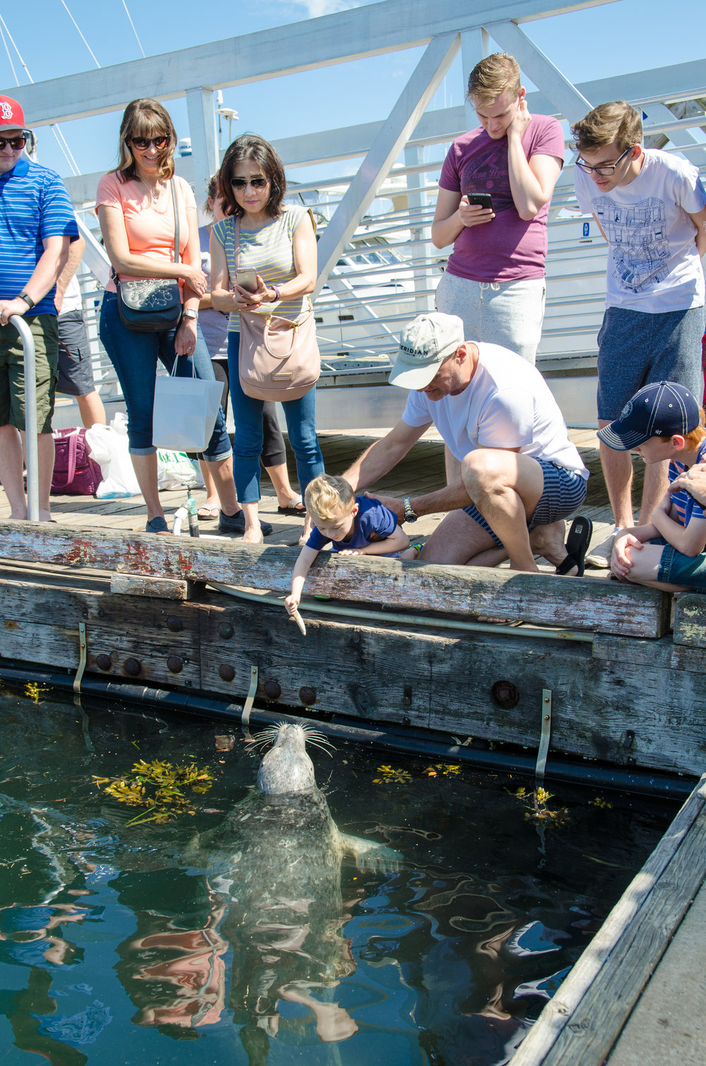 Friday Harbor feeding Popeye the Seal // by {Totes and the City}