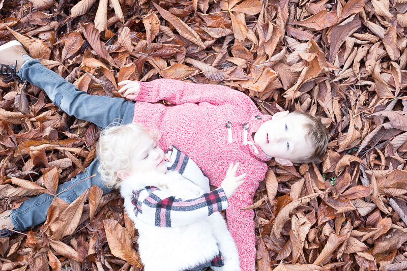 BEFORE original photo 2 of Totes and Apple laying in the leaves at Woodland Park