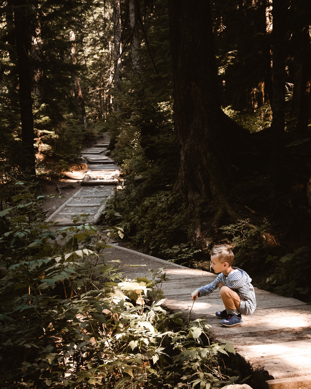 Nature walk trails to Franklin Falls along the Denny Creek Trail with Totes and Apple