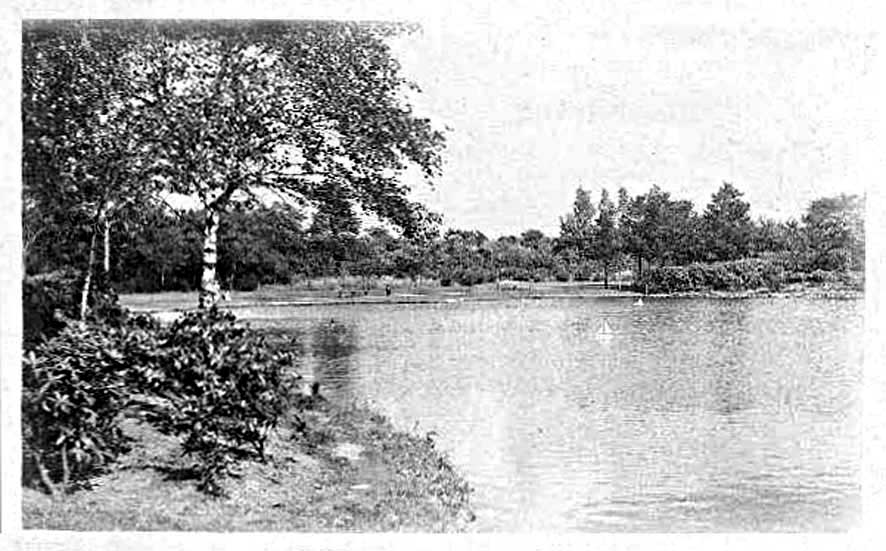 Wimbledon Common 2.jpg