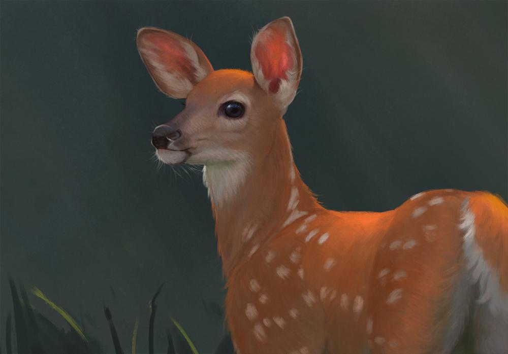 Leesha-Hannigan-Deer