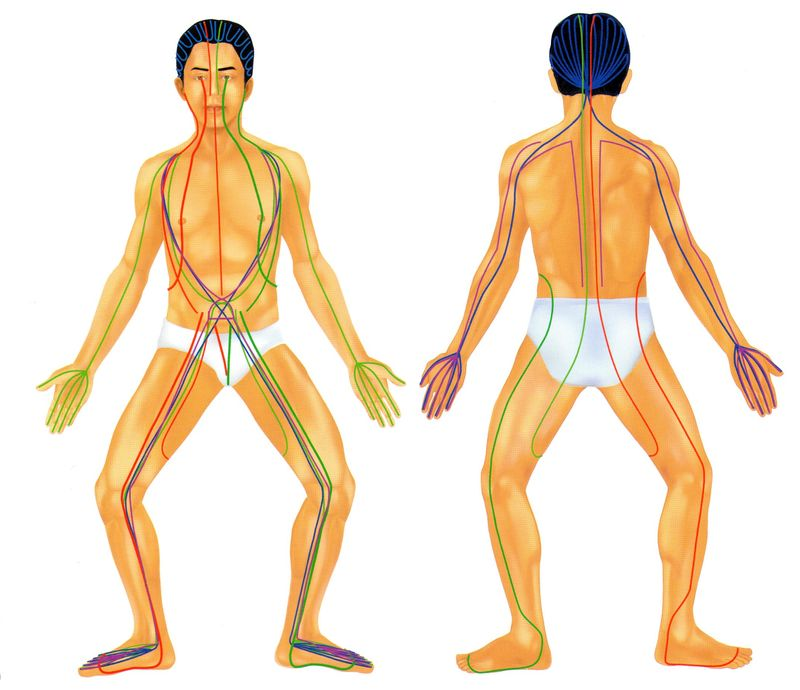 Traditional 'sen'  lines in the body