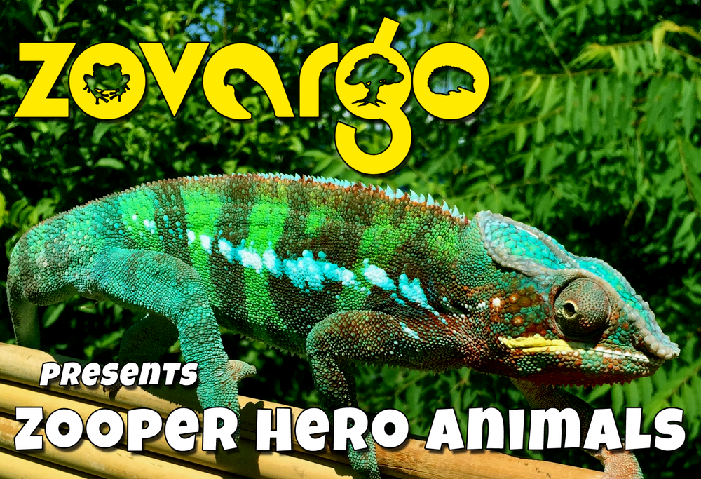 Zovargo_chameleon_ambassador