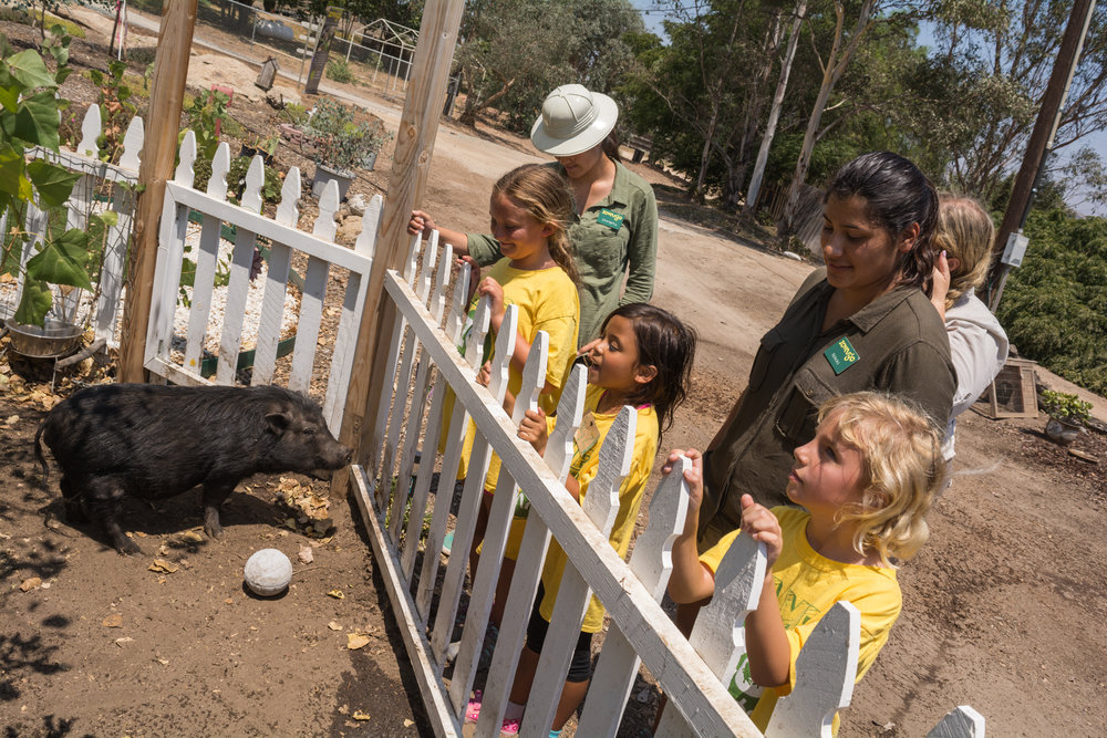 Campers meeting rescued pig - Credit: Jorge Ibarra