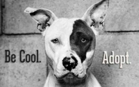 Image from https://emmanuellechaix.com/2015/11/29/be-cool-adopt/