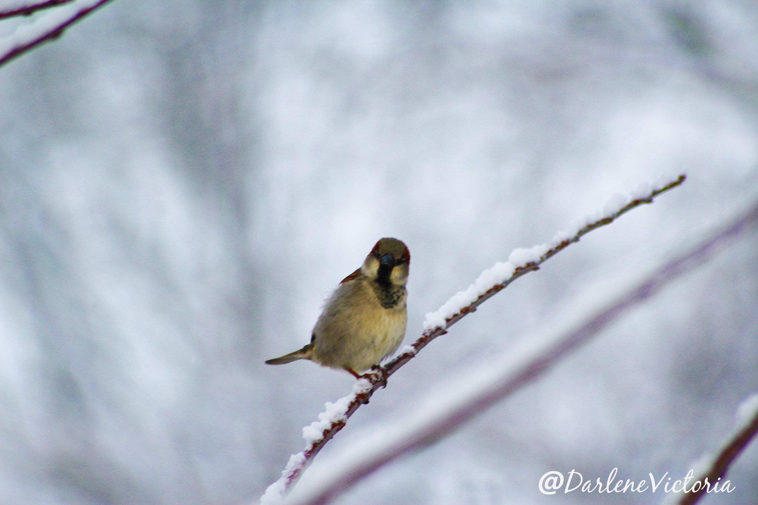 birdmomentweb