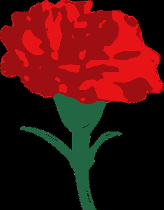 carnation-157672_960_720.png