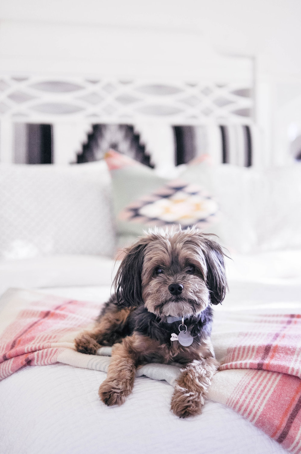 cute dog on bed with striped pink throw