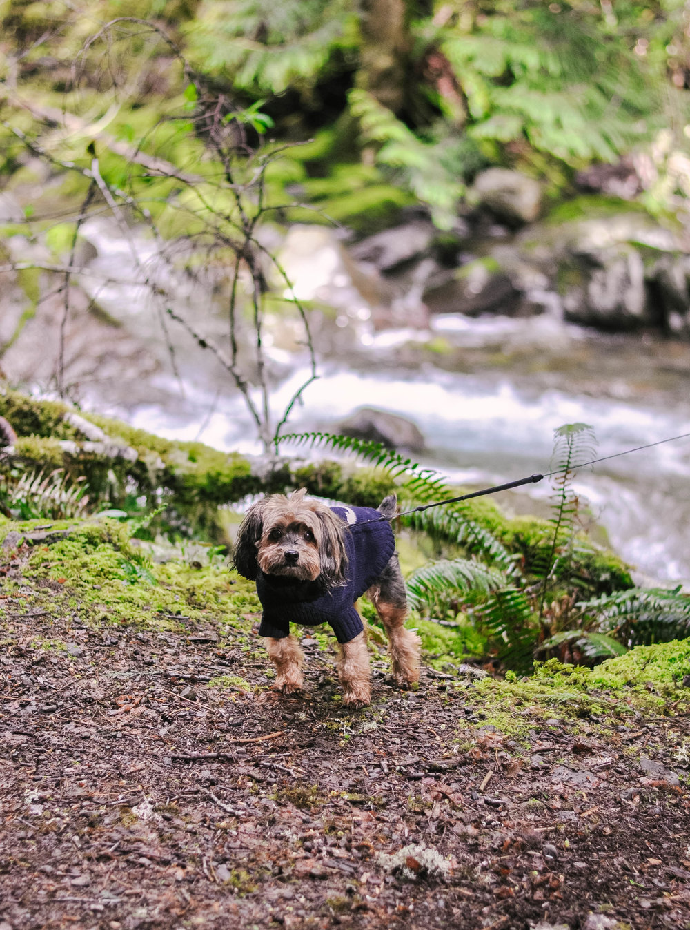 Small dog in coat by stream