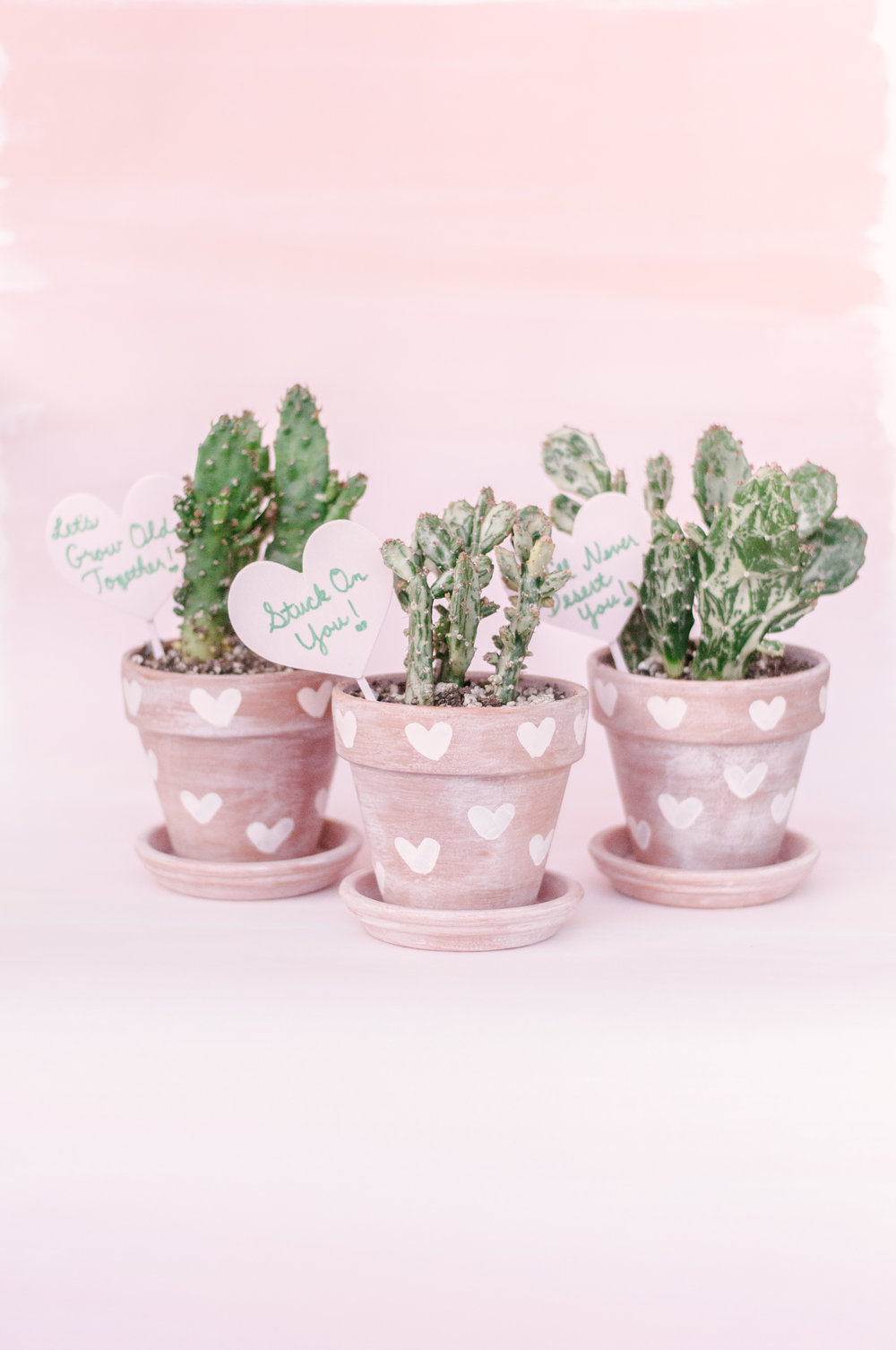 Cute Cactus Planters