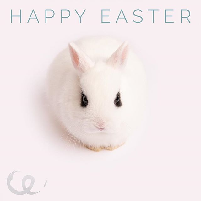 Happy Easter to all of you! 🐣 💐