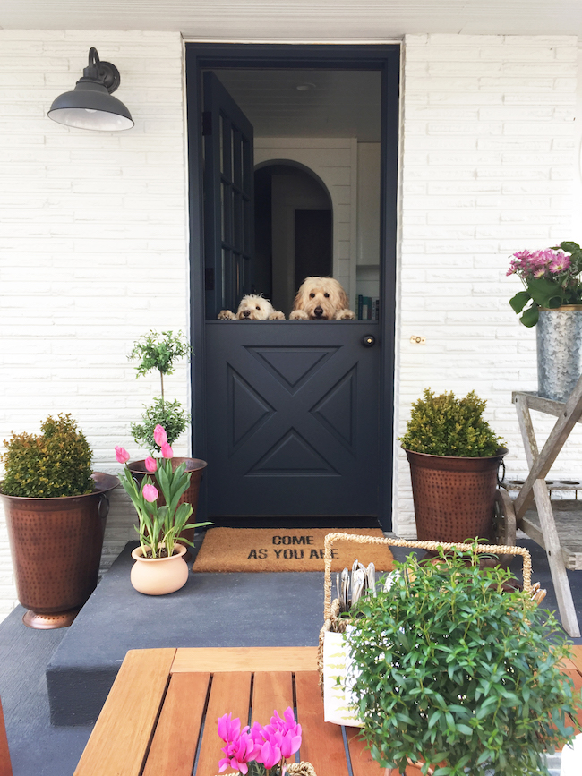 Dutch-Door-Dogs-1.jpg