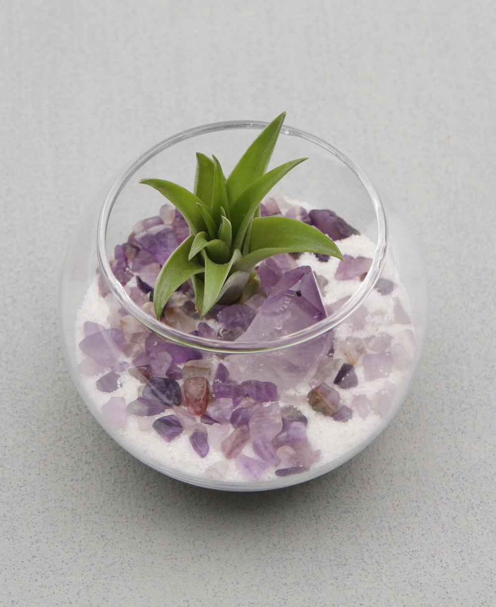 Amethyst Healing Crystal Terrarium