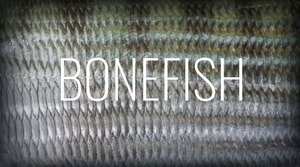 bonefish.jpeg