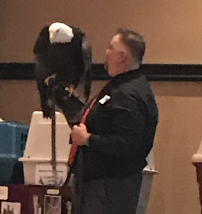 Freedom the Bald Eagle