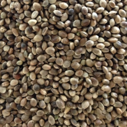 hemp seeds.png