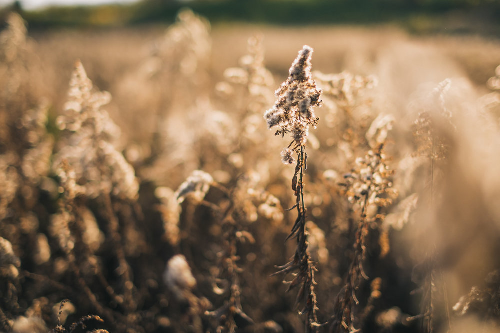 Nature - Grain.jpg