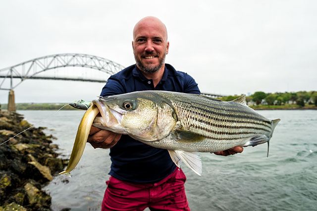 Striped Bass Like The Fiiish Crazy Sandeel Henry Gilbey