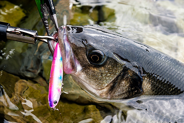when and how to use surface lures