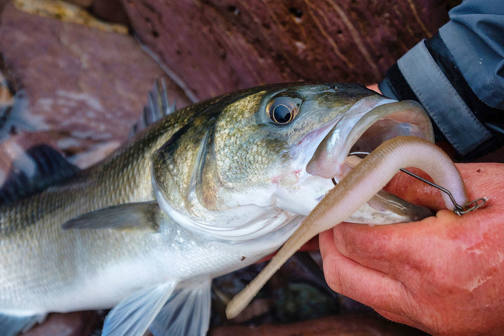 My go-to bass fishing lures -